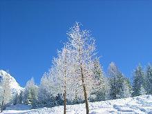 Schneebedeckte B�ume