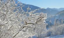Schneebedeckte Sträucher