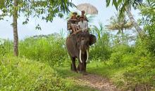 Ausflug auf dem Elefant