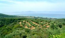 Landschaft um den Kyllini Beach