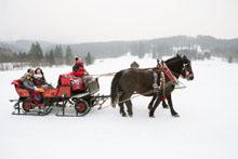 Pferdekutsche im Schnee